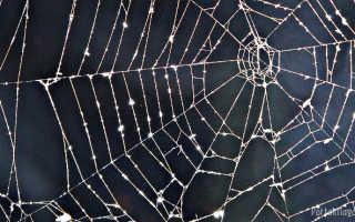 Что означает паутина согласно приметам