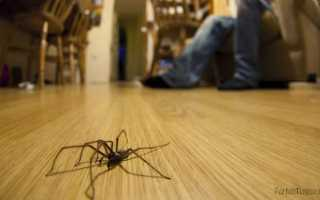 Что означает по примете появление паука в квартире