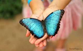 Что вещает примета, если в дом залетела бабочка