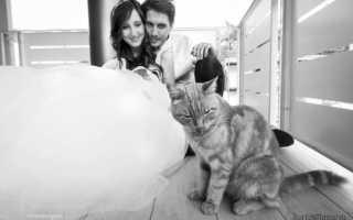 Как влияет кошка на дом и человека согласно приметам