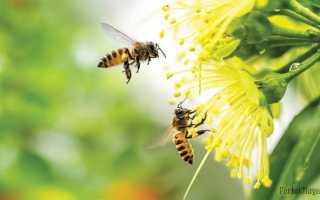 К чему заводятся пчелы согласно приметам