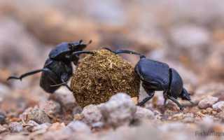 Суеверия и приметы, связанные с жуками