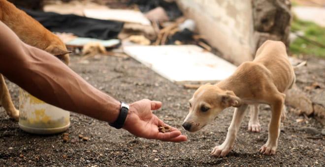 Подкормка бездомных собак