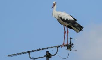 Птица присела на антенну