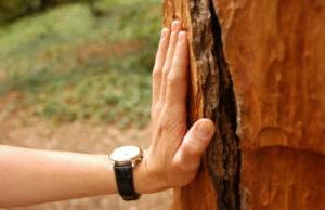 Исцеляющее дерево