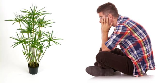 Депрессия у цветка