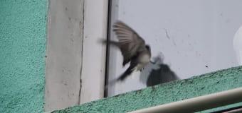Птичка стукнулась об окно