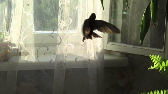 Птичка в квартире