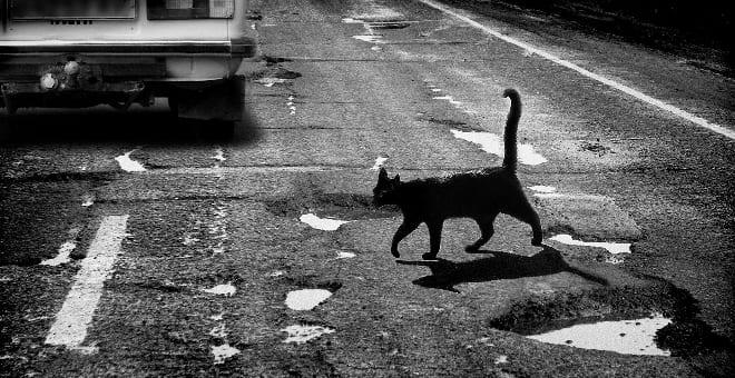 Кот перебегает дорогу