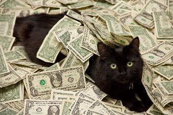 Кот дары приносящий
