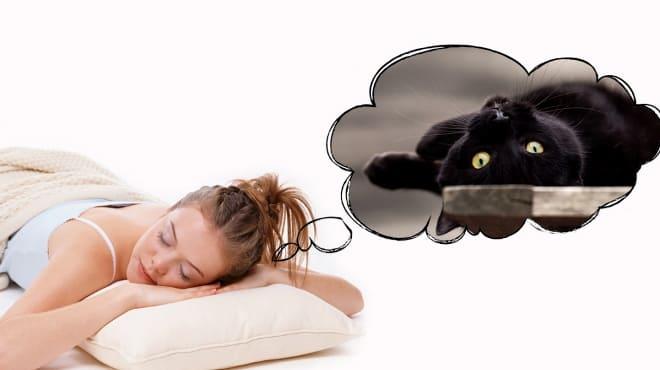 Если снится чёрная киска