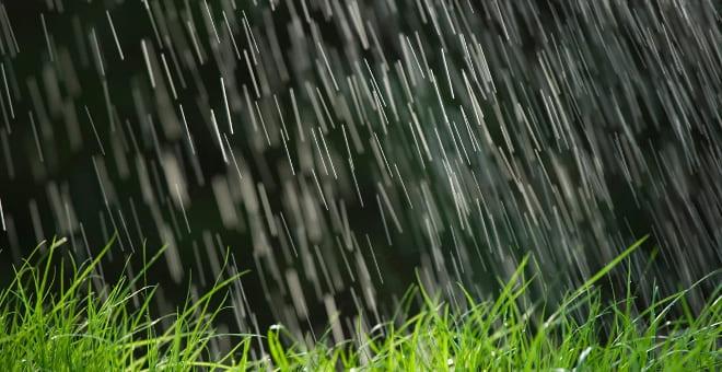 Трава растёт от дождя