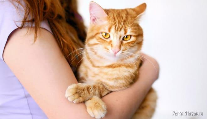 На руках рыжий кот