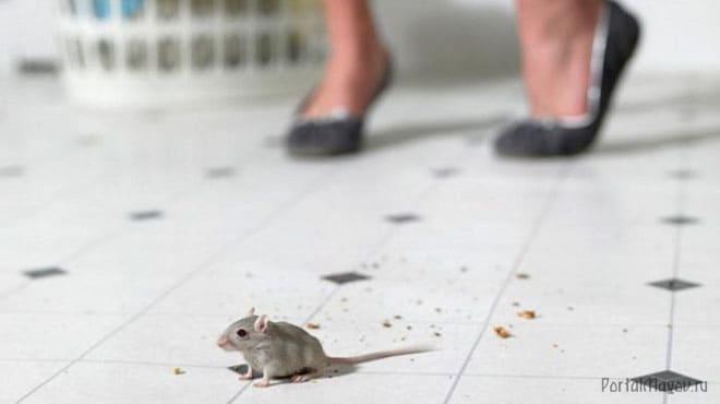 Если мышь перебежала дорогу
