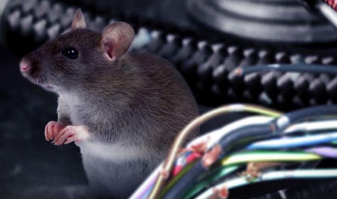 Мышь завелась в машине