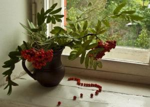 Красная рябина в доме