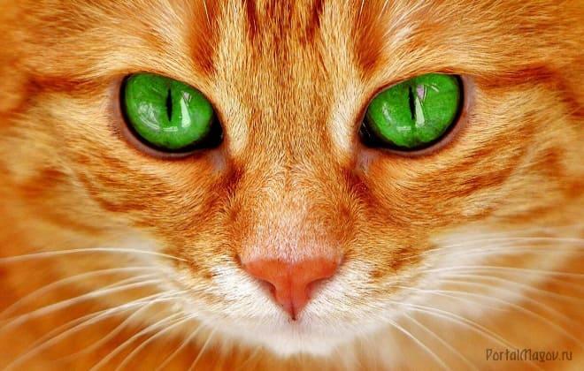 Рыжий кот с зелёными глазами