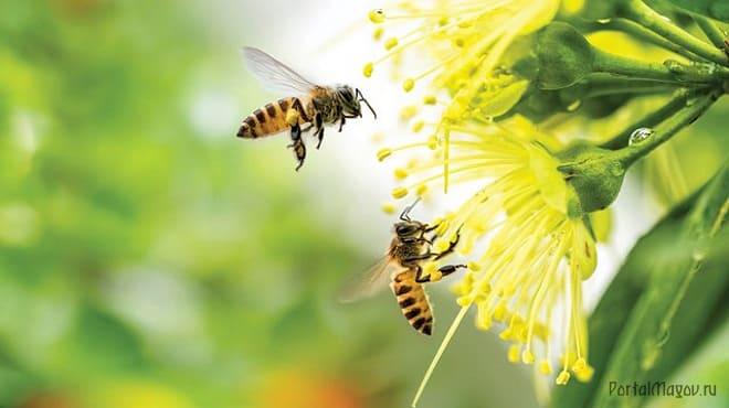 Осы летят к цветку