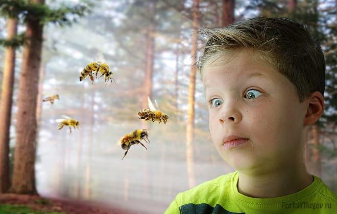 Нападение пчёл