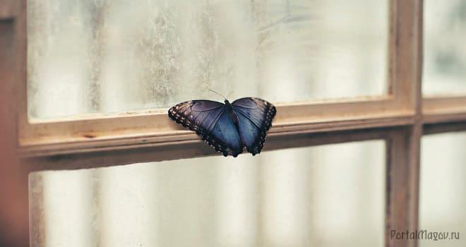 Бьющаяся в окно бабочка