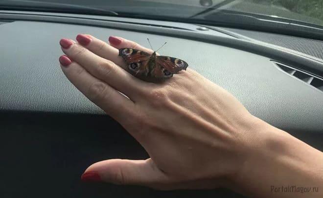 В машину залетела бабочка