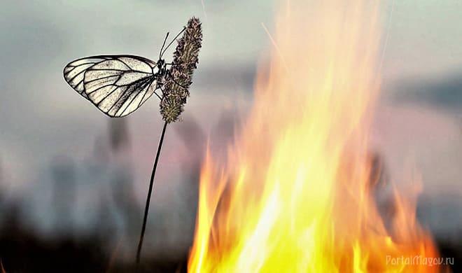Огонь в поле