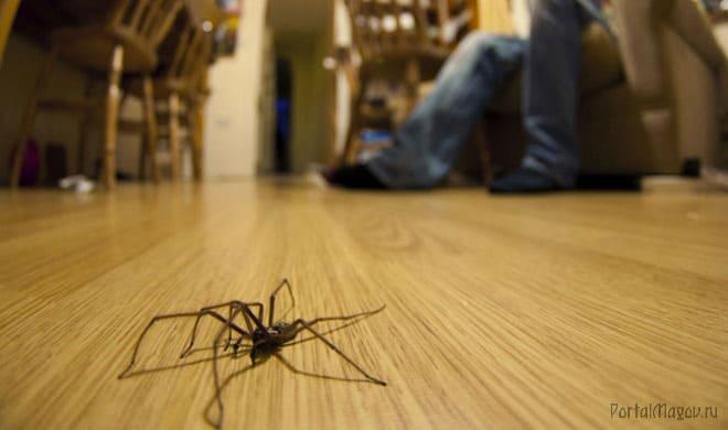 Примета про паука в квартире
