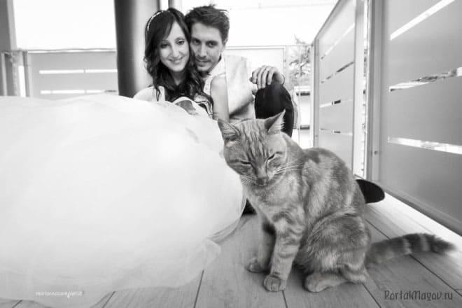 Новобрачные и кошка
