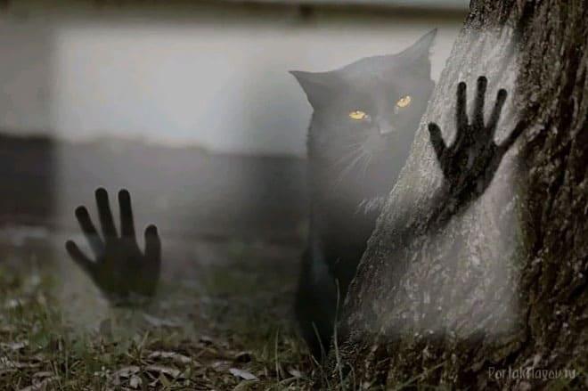 Кот и призрак