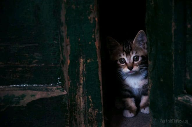 Котёнок пришёл в дом