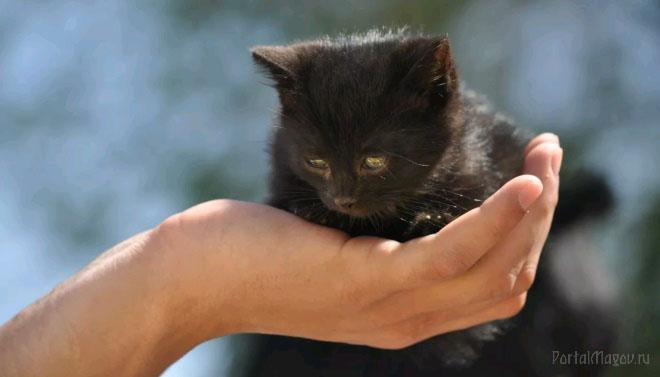 Чёрный котик на руке