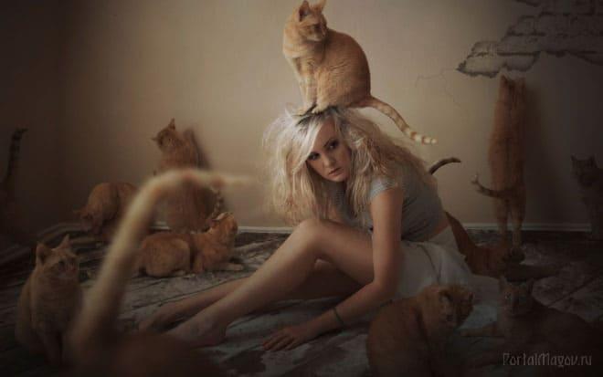 Коты и старая дева